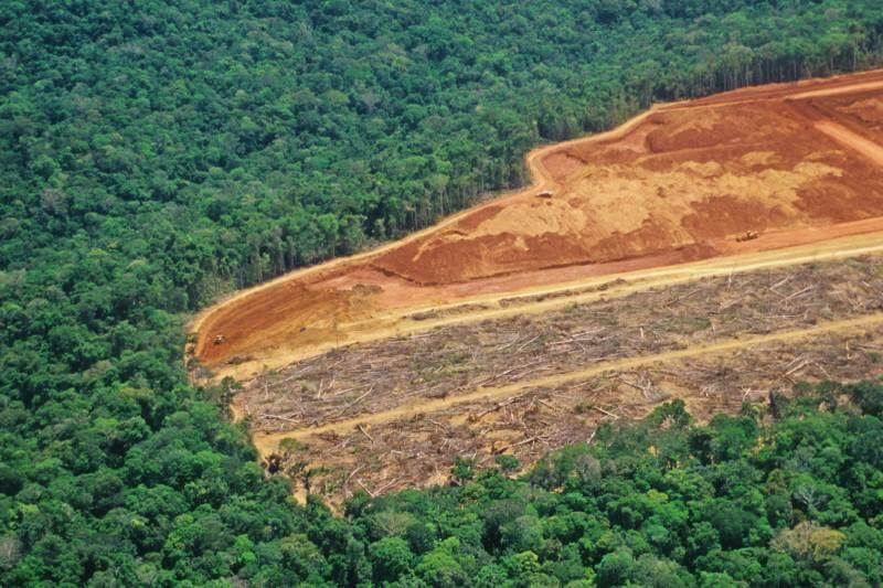 Cada seis segundos se pierde un campo de fútbol de área forestal