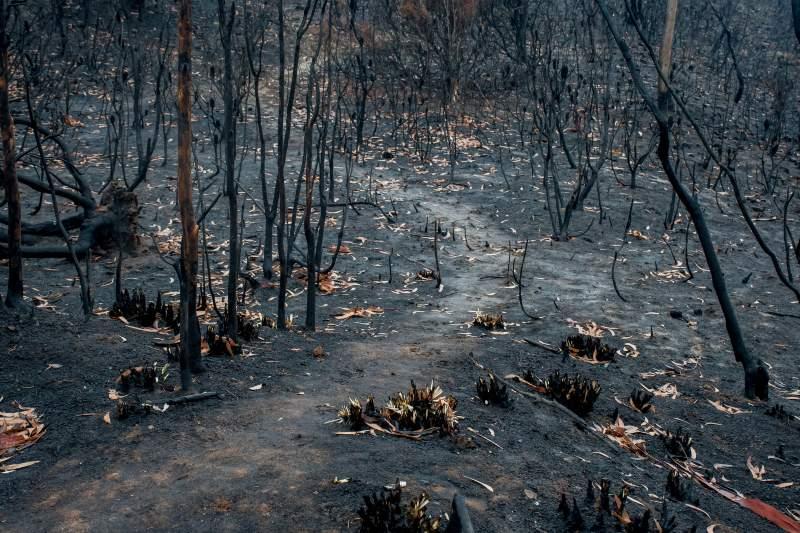 temporada de incendios en Australia puede repetirse