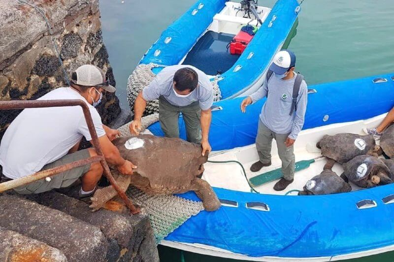 Tortugas en cautiverio vuelven a Isla Galápagos