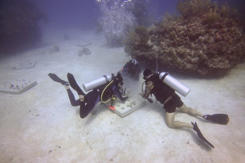 Alianza para proteger corales en la Riviera Maya