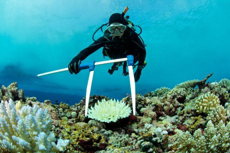 Corales de acuario también se ven afectados por el cambio climático