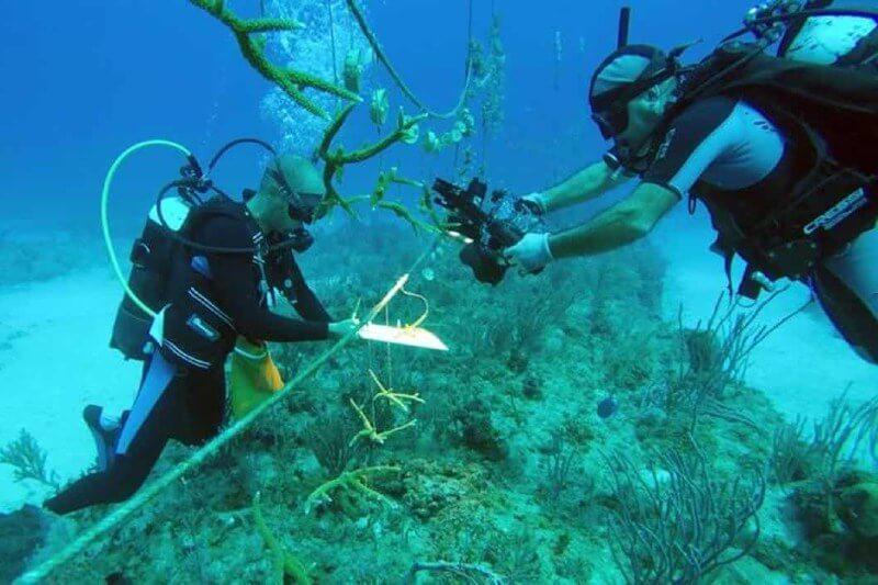 Cuba siembra arrecifes de corales en vivero marino