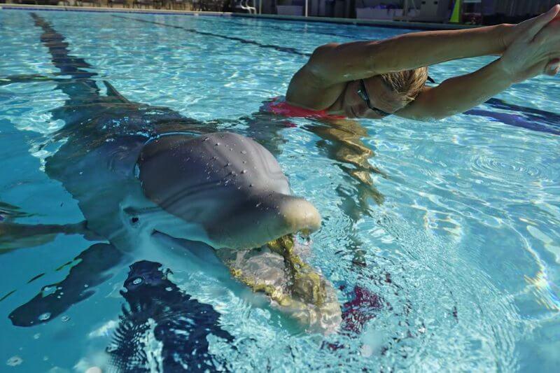 Delfines robóticos para evitar maltrato animal en acuarios
