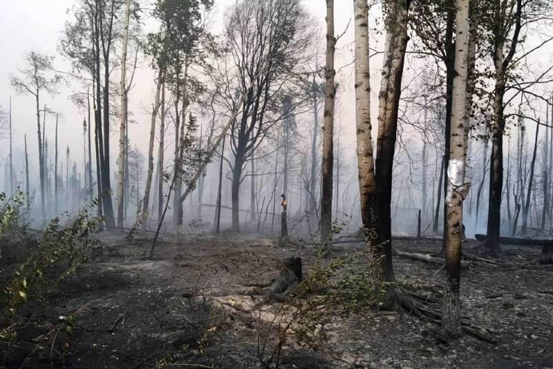 Incendios forestales en el Ártico rompen récord de contaminación