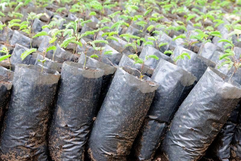 Plantar árboles no es la mejor solución al cambio climático