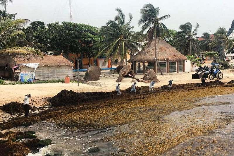 Sargazo invade playas de Quintana Roo