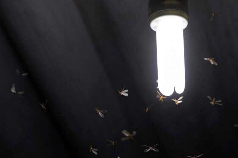 Alemania planea atenuar sus luces para salvar a los insectos