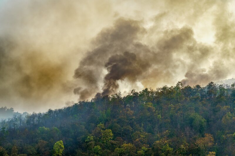 Incendios forestales aumentaron en julio en la Amazonía
