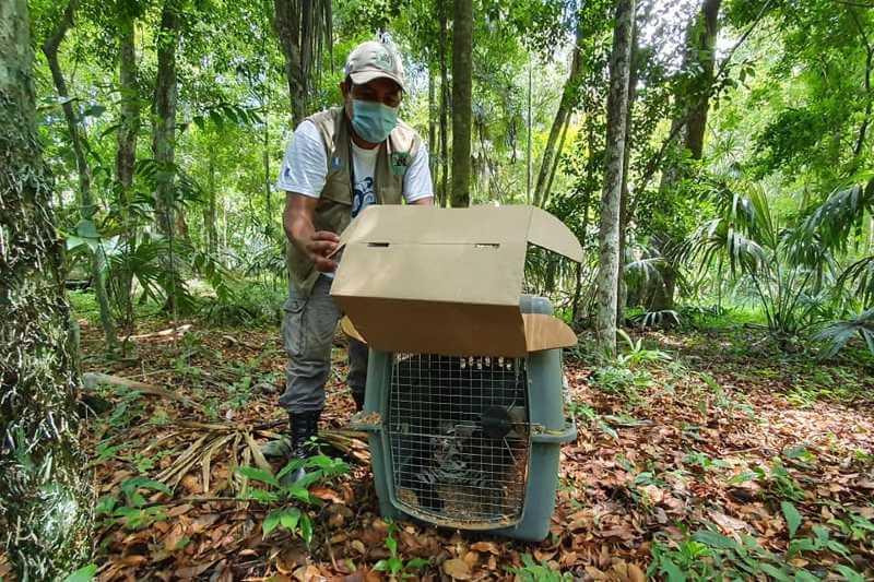 Liberan animales rescatados de tráfico ilegal en Guatemala