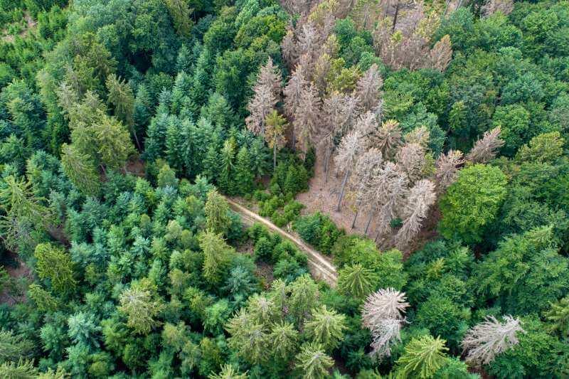 Árboles que crecen más rápido mueren antes debido al aumento de CO2