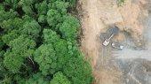 Delitos ambientales impulsan a la deforestación