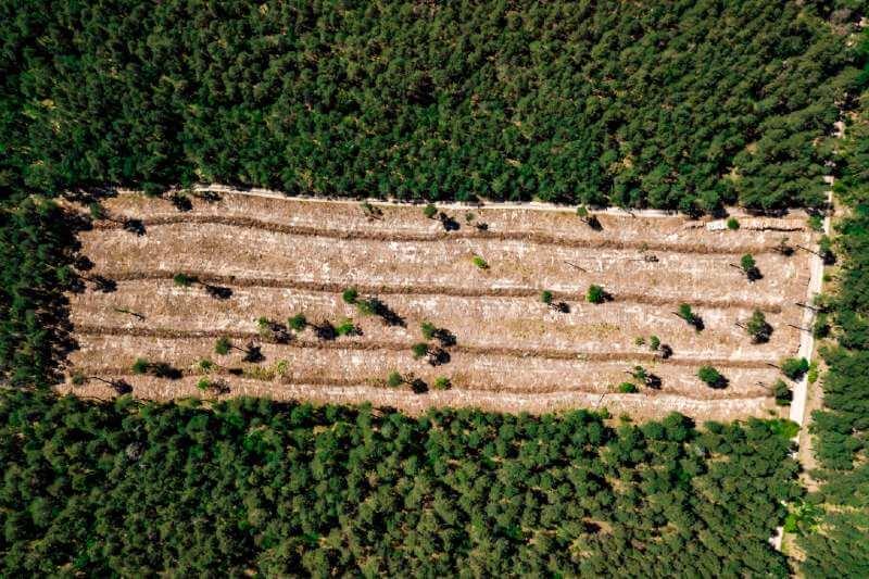 Destrucción de bosques desencadenará más pandemias