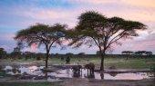 Restringen paso de mineras chinas en parque de Zimbabue