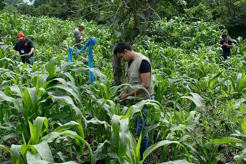 WCK llega a Guatemala para agricultores