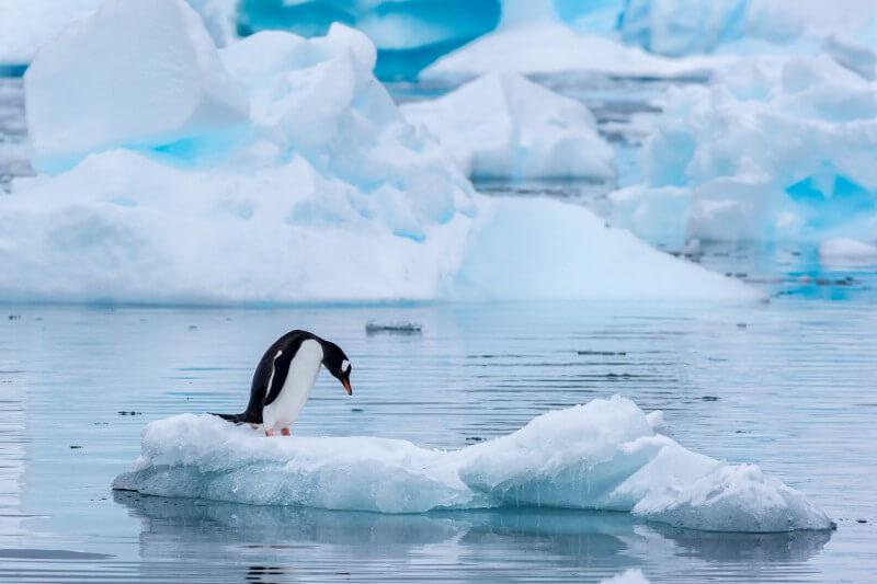 Derretimiento del hielo de la Antártida elevará el nivel del mar 2.5 m