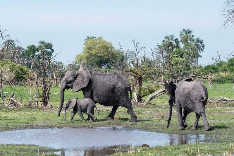 Resuelven el misterio de muertes masivas de elefantes