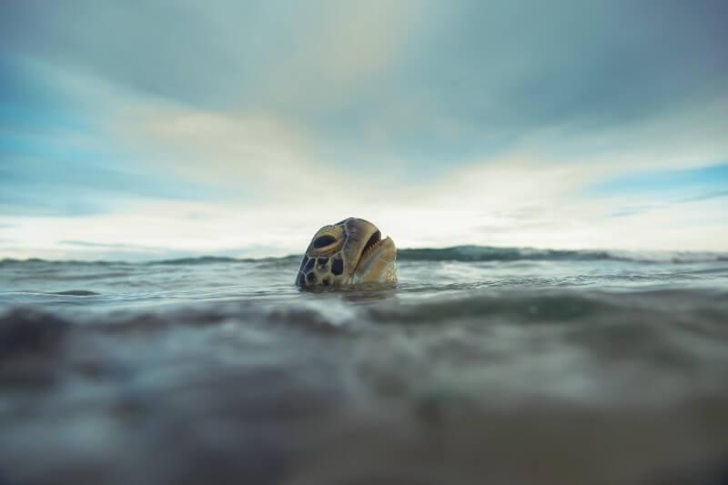 Especies marinas escapan de olas de calor