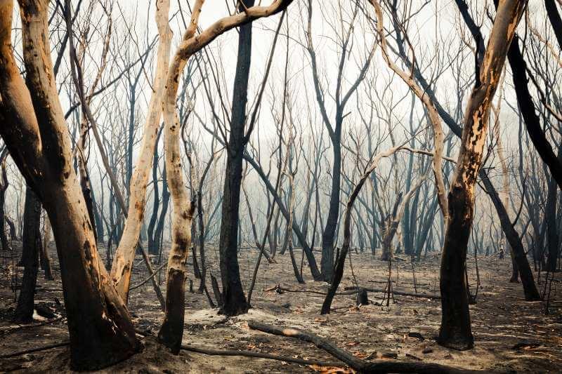 Incendios forestales: ¿por qué algunos árboles se queman y otros no?