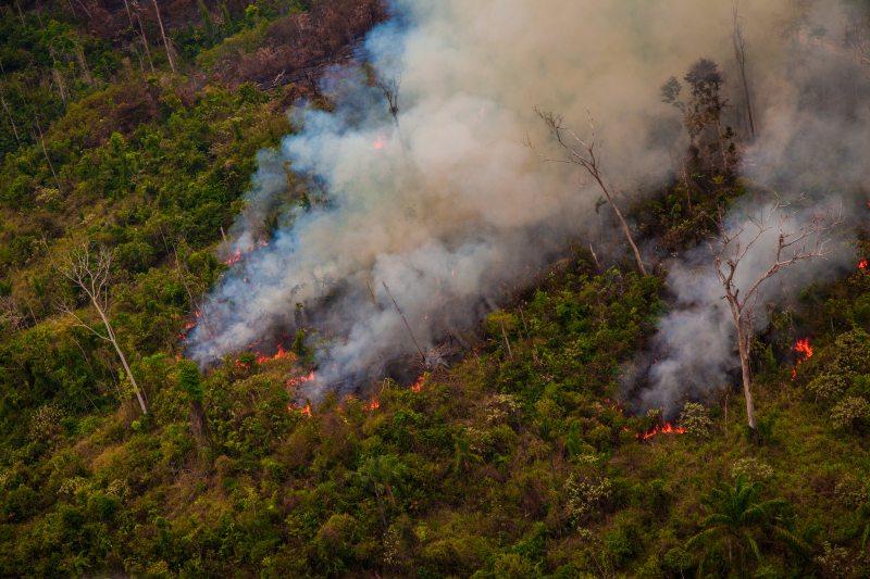Amazonía registra el octubre con mayor deforestación en seis años