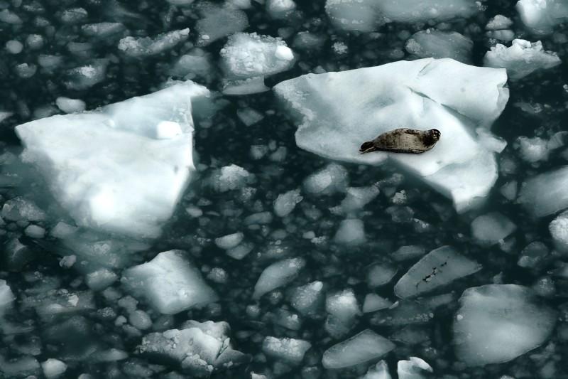 El invierno se acerca y el hielo marino del Ártico no se congela