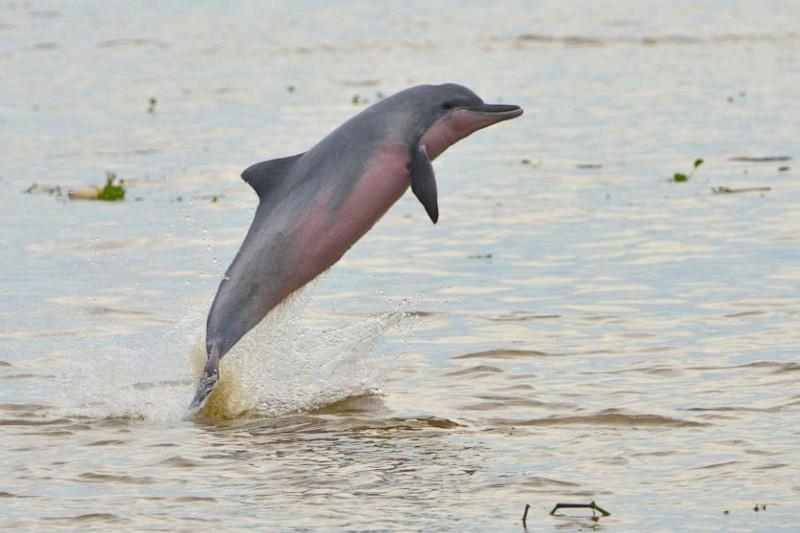 31 especies ahora extintas se unen a la lista roja de uicn
