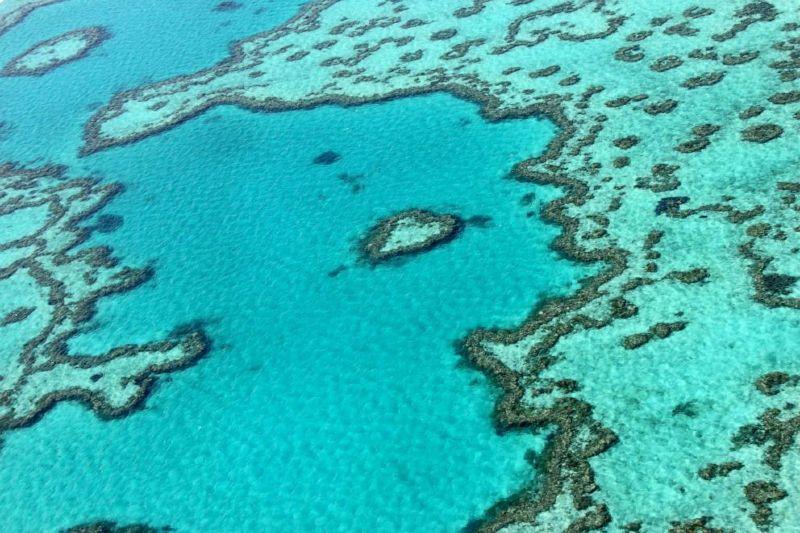 Gran barrera de coral se encuentra en niveles críticos