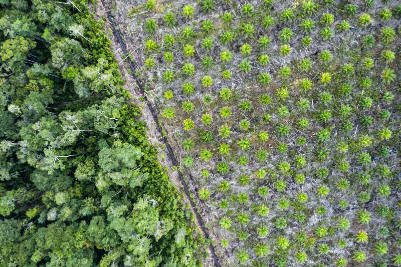 Industria alimentaria culpable de la rápida pérdida de hábitats