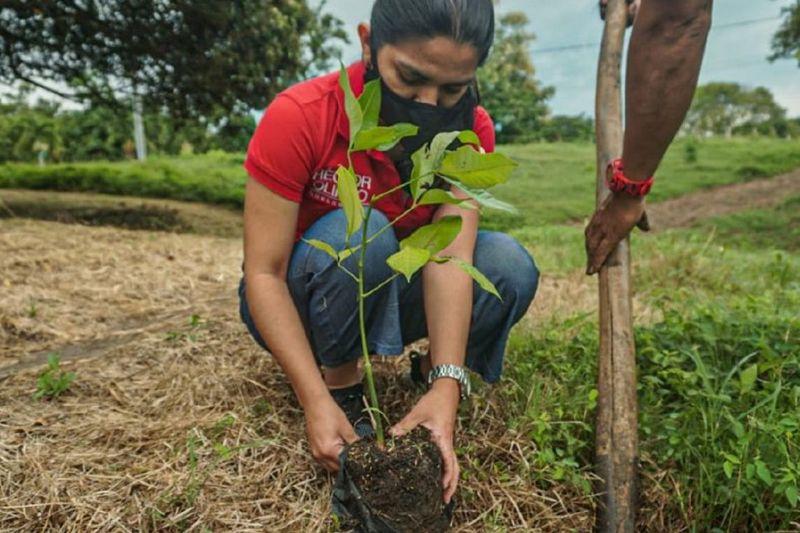 Colombia combate la defoersación con planes de reforestación