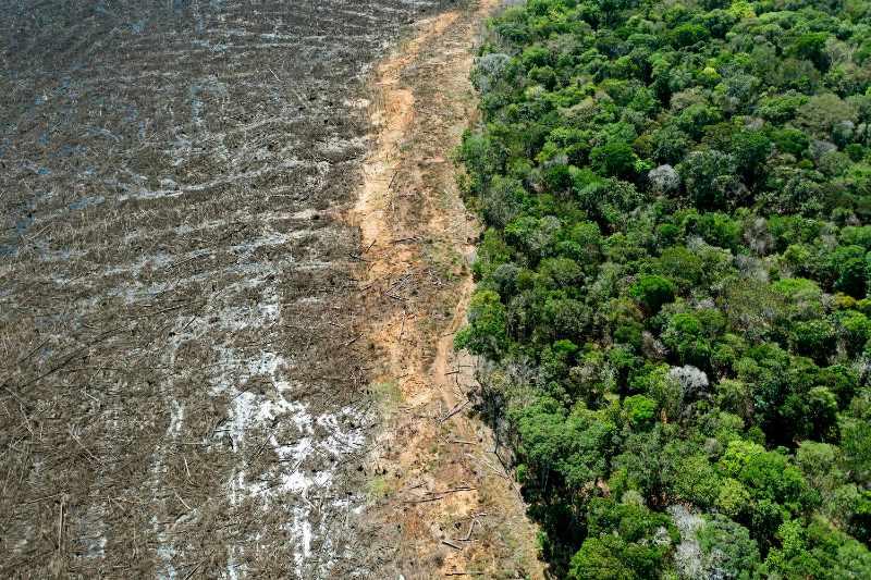 Amazonía perdió 8,500 km2 en 2020