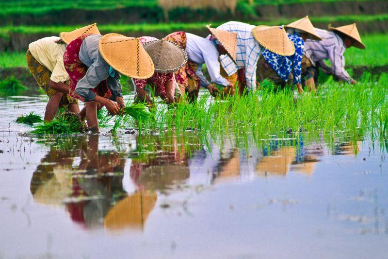 Calor extremo afecta trabajadores del sudeste asiático