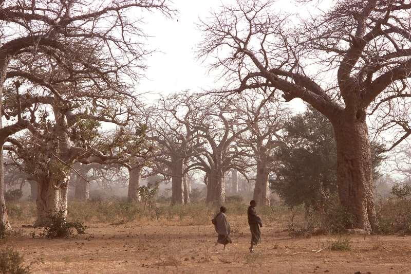 Crece el apoyo para la gran muralla verde en África