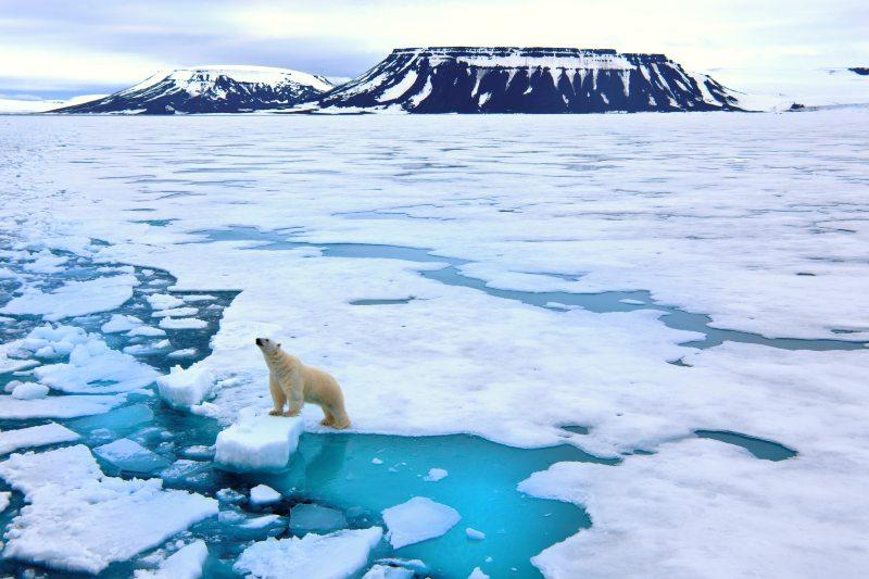 Disney hará película sobre el cambio climático en Svalbard