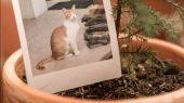 Empresa colombiana convierte las mascotas muertas en abono orgánico