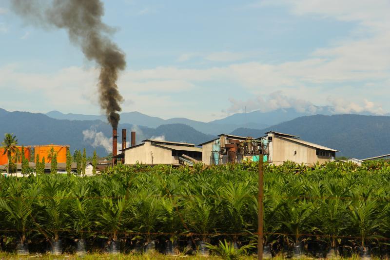 Pueblo de Indonesia sufre las graves consecuencias de la industria del aceite de palma