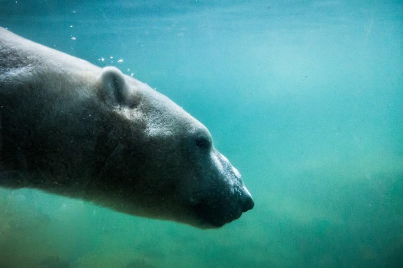 Microfibras de plástico de nuestra ropa contaminan el Océano Ártico