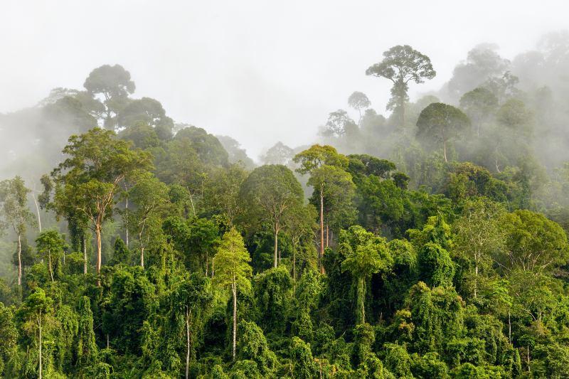 Los bosques son la opción más efectiva y natural para captura de carbono