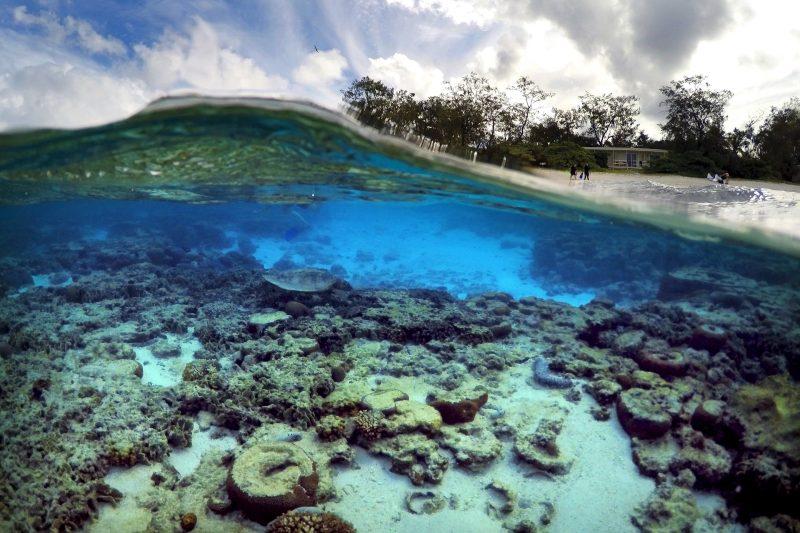 Gran Barrera de Coral en deterioro según calificaciones de patrimonio mundial