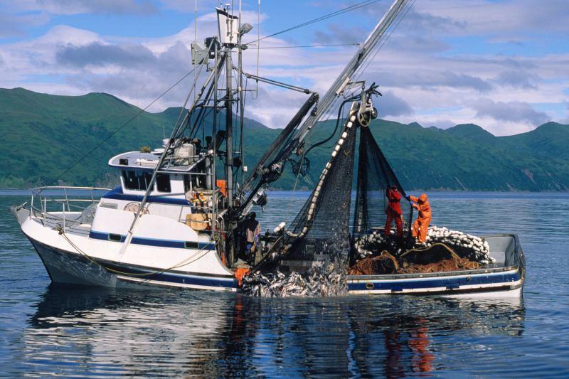 La pesca munidial de salmón causa daños de $50 mil millones en contaminación