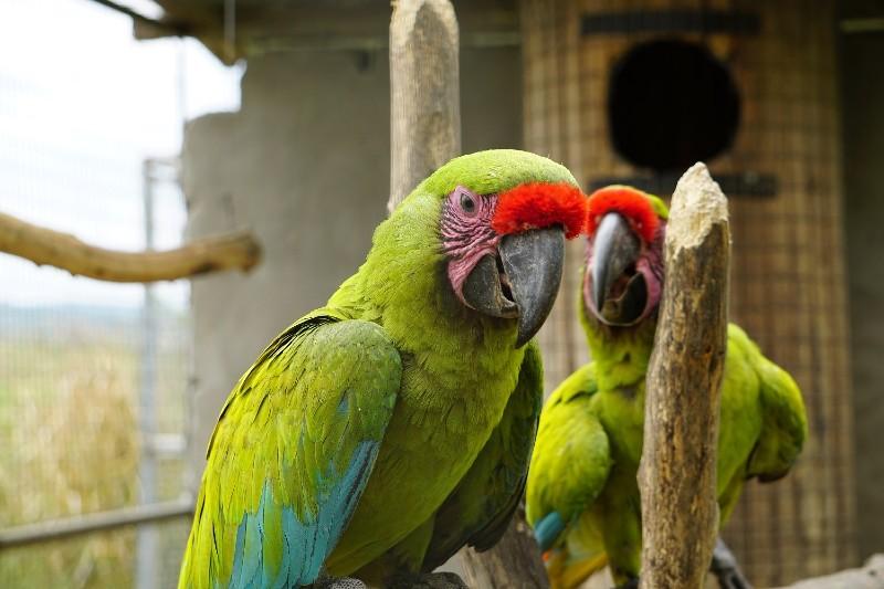 Ecuador lanza campaña para detener el tráfico ilegal de animales silvestres