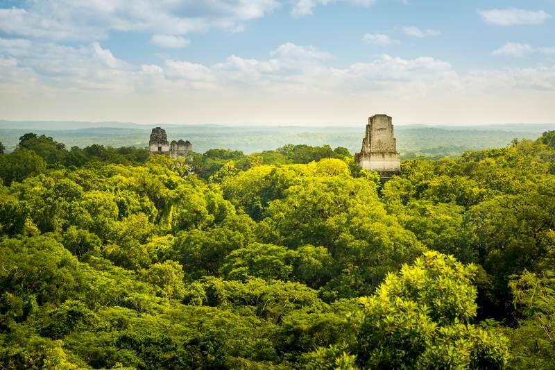 Iniciativa une a Mesoamérica para proteger sus bosques más grandes