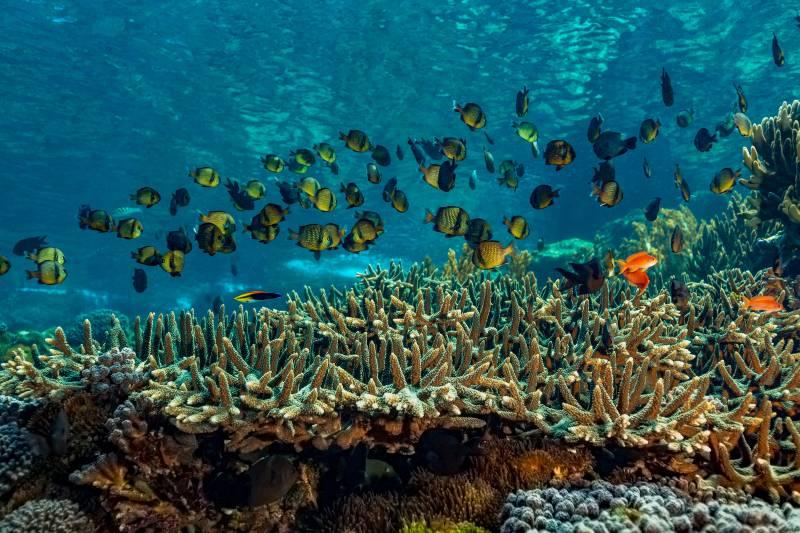 Primer estudio único en su tipo ofrece un plan de protección para los océanos