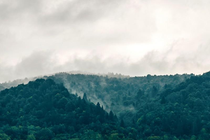 5 soluciones para salvar los bosques y paisajes