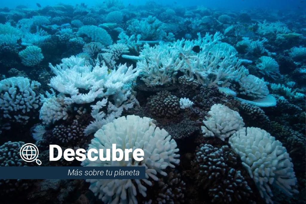 Descubre: todo lo que necesitas saber sobre corales