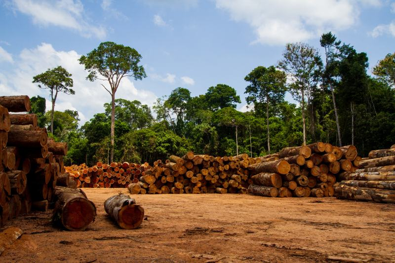Agricultura y tala sostenible reducen el riesgo de extinción de especies