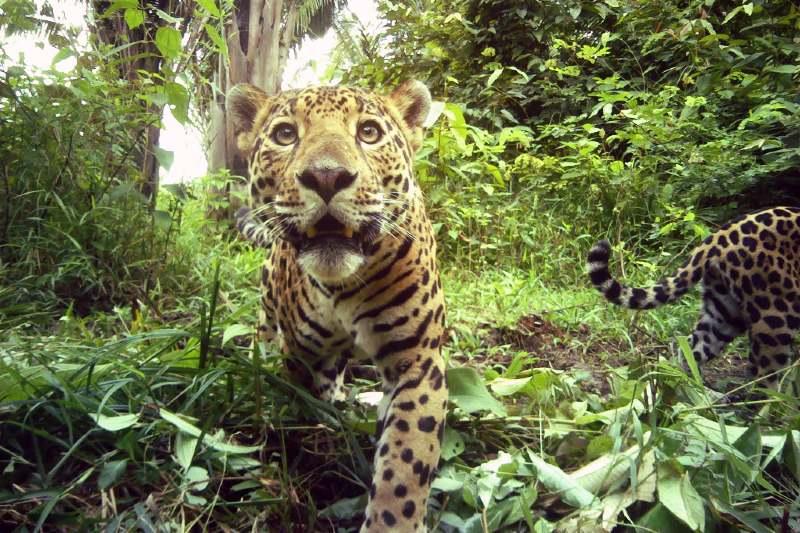 Grupos ecologistas compran bosque de Belice para su conservación