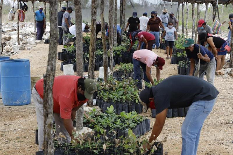 México: presidente impulsa controversial proyecto de reforestación para evitar la migración - Foto por Martin Zetina/AP