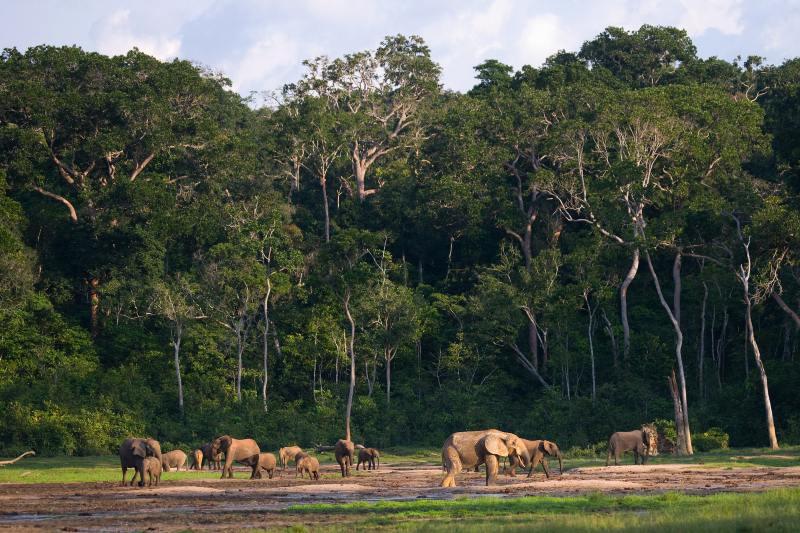 Estamos en un momento decisivo para los bosques