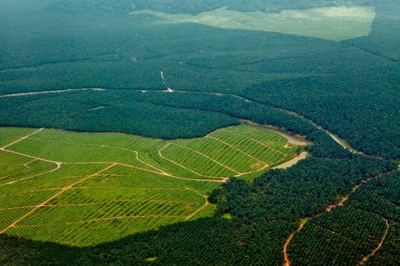 Solo el 3% de los ecosistemas permanecen intactos en el mundo