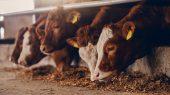 Ayuda a enfriar el planeta consumiendo menos carne