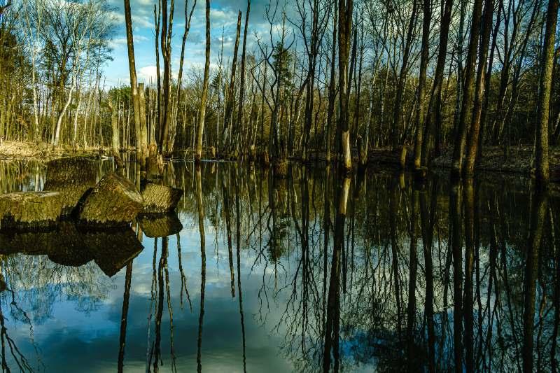 Los bosques fantasma tiran gases contaminantes para el ambiente